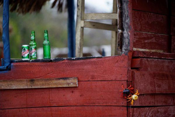 Миллионы крабов на южном побережье Кубы. Краб, фотография, Куба, путешествия, длиннопост, zanamiclub