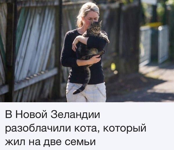 Одной семьи рабов коту было мало.. кот, Хитрожопопость, новости, приколы с животными