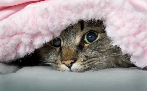 cat urine doesnt smell like ammonia