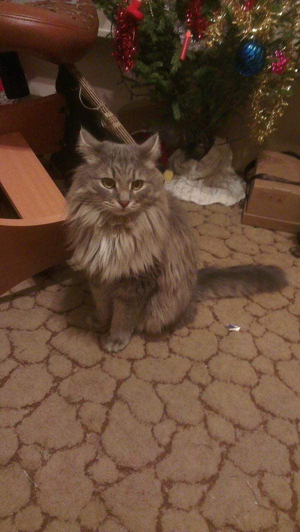 Заслуги моего кота за последние 2 года кот, хулиганство, длиннопост