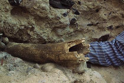 Найдены следы самых древних американцев лента, антропология, древние люди, палеонтология