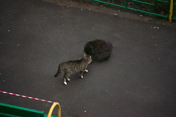 - А ты кто такой? кот, котомафия, длиннопост