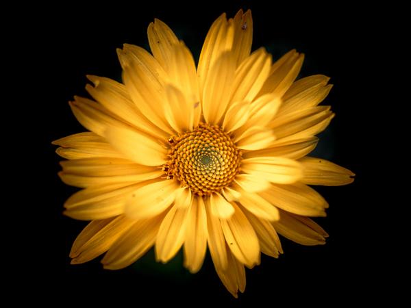 Цветок в палисаднике Фотография, Цветы, Макро, Nikon, Tokina