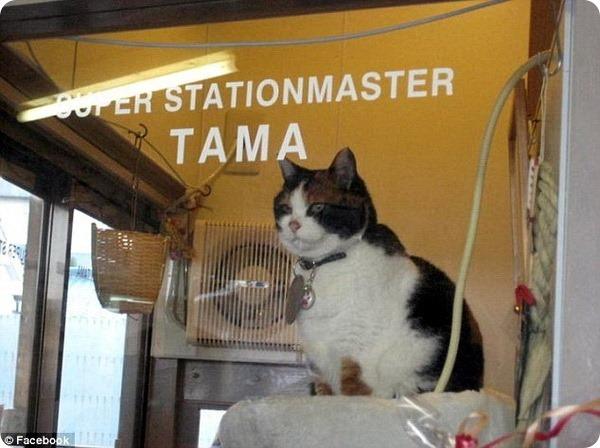 18 лет со дня рождения кошки Тамы Кот, День рождения, Апрель, Япония, Совершеннолетие, Длиннопост