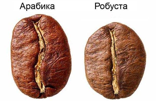 Арабика и Робуста. Различия. Кофе, Бариста, Познавательно