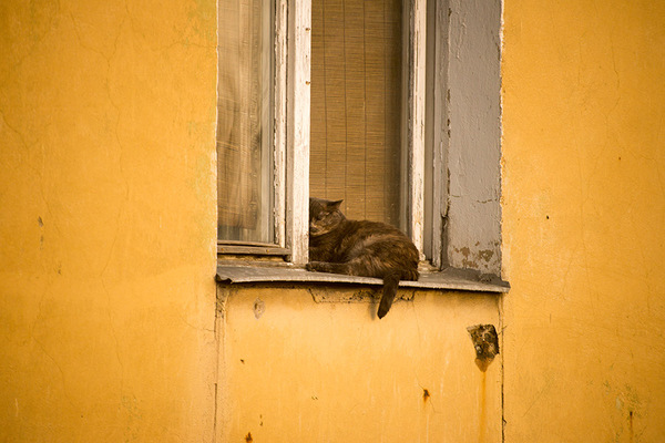 Кот, отрастивший дзен. кот, котомафия, длиннопост