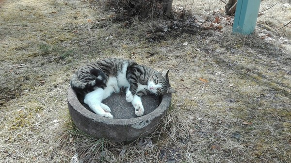 Весна? Кот, Своё, Весна