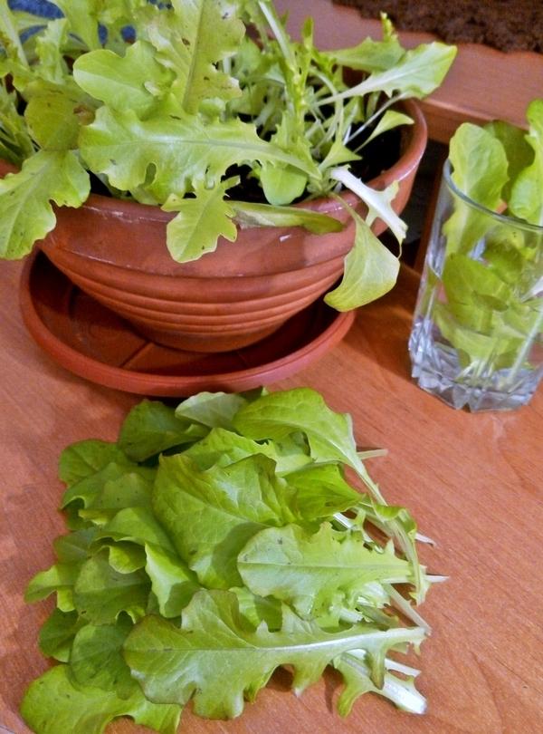 Домашний салат салат, огород на подоконнике, зелень на подоконнике, зелень, длиннопост