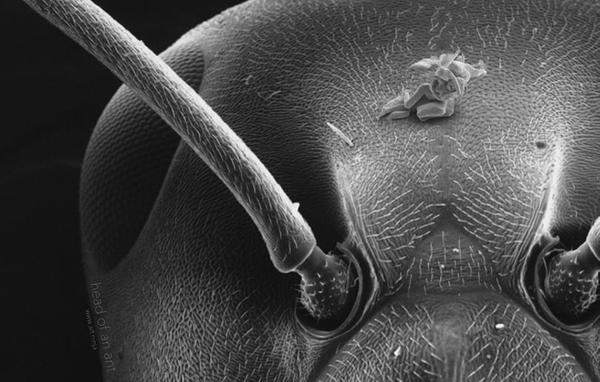 Микроскультптуры скульптура, микроскоп, Искусство, видео, длиннопост
