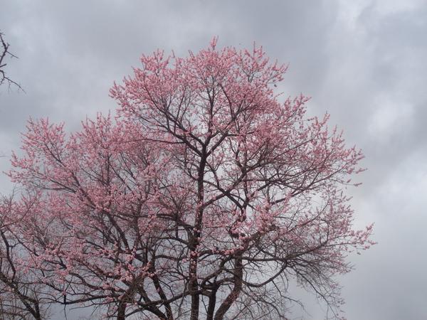 Весна пришла в Приморье (город Артём) Приморский край, артем, весна, май, длиннопост