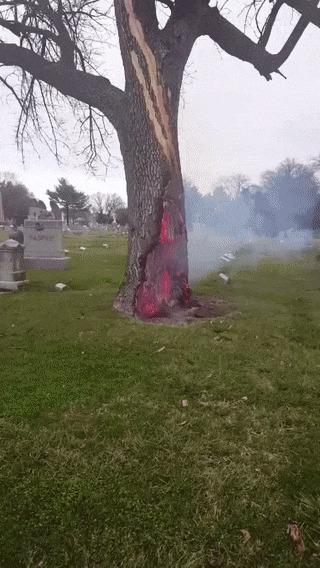 Дерево на кладбище, в которое попала молния Дерево, Кладбище, Портал, Преисподняя, Гифка
