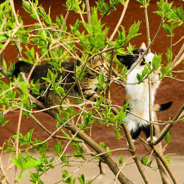 В нашем дворе котики размножаются почкованием.