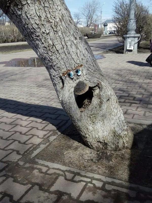 О, привет! дерево, центр, Кострома, Улыбнуло, добро