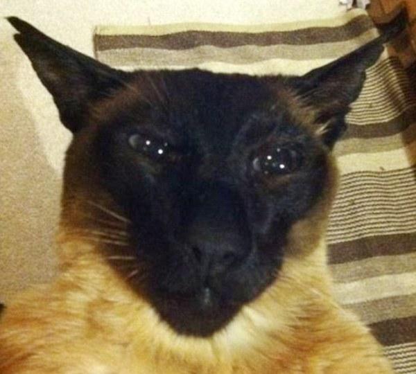 В Новой Зеландии кот 10 лет жил на две семьи кот, новая зеландия
