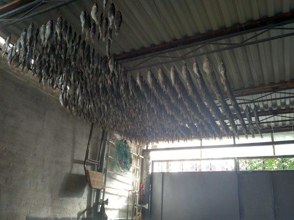 Астраханская вобла Вобла, Рыба, Рыбалка, Фото на тапок