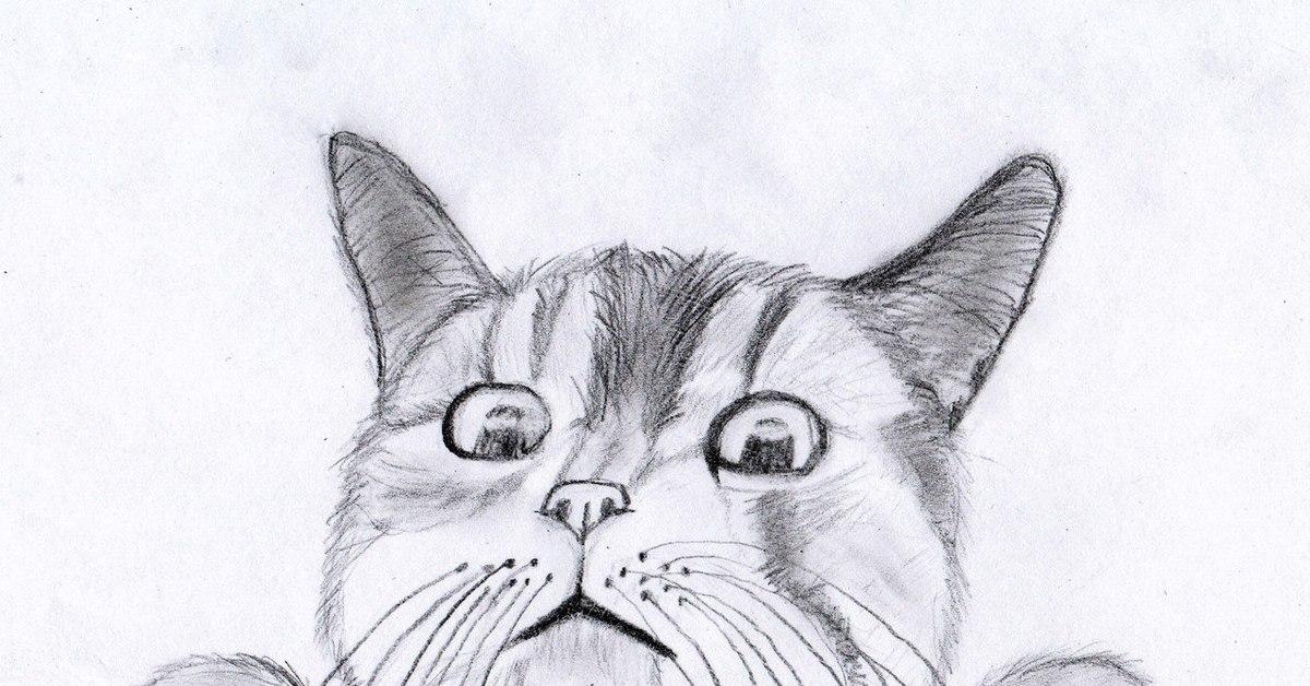 Рисунки котики простые