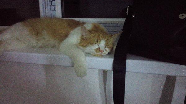 Потерялся кот Кот, Потерялся, Фотография, Белореченск, Длиннопост