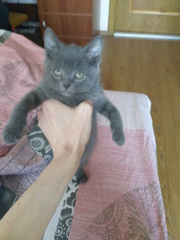 Вот такого котика подобрал с улицы Кот, Подобрал котейку, Киев, Длиннопост