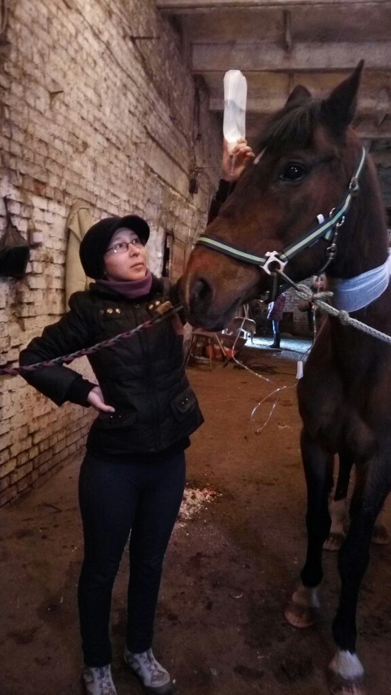 Конные будни очкарика лошадь, кони, животные, приют для животных, Болезнь, ветеринария, фотография, видео, длиннопост