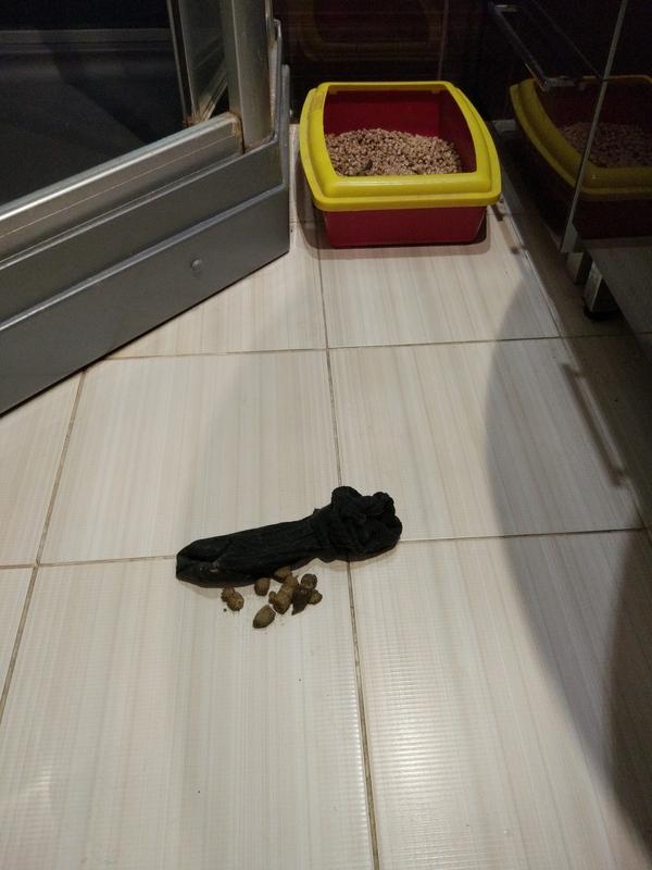 Коты пытались убрать за собой. Кот, Умнеют, На, Глазах, Говно