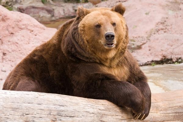 Михалыч Фотография, Михалыч, Медведь, Горы