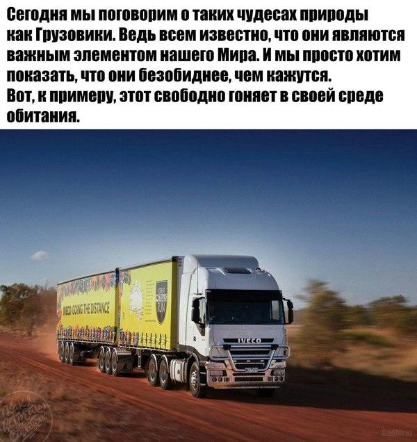 Порно с водилами грузовиков