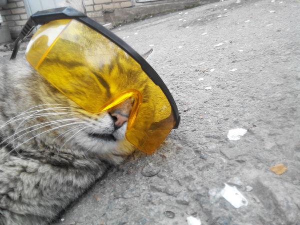 Просто кот в очках