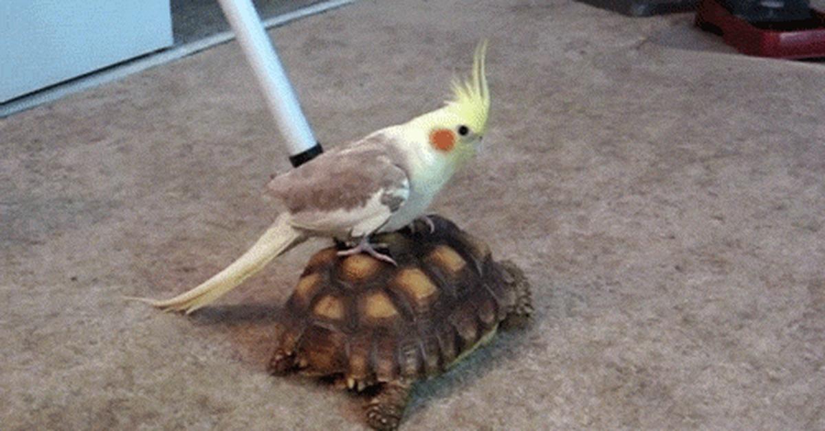 Отпуск, попугай и черепаха дружба гифка
