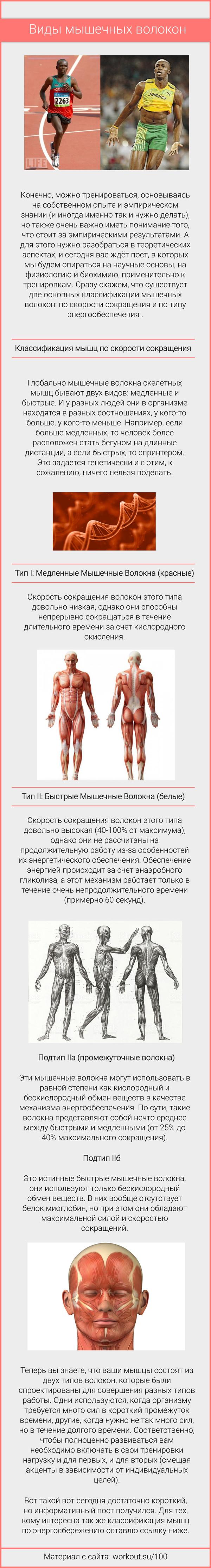 Мышцы бывают разные Спорт, Здоровье, Мышцы, Воркаут, Тренировка, Длиннопост