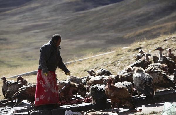 Как хоронят в Тибете: церемония небесного погребения. Продолжение. Традиции, тибет, Небесное погребение, длиннопост, жесть
