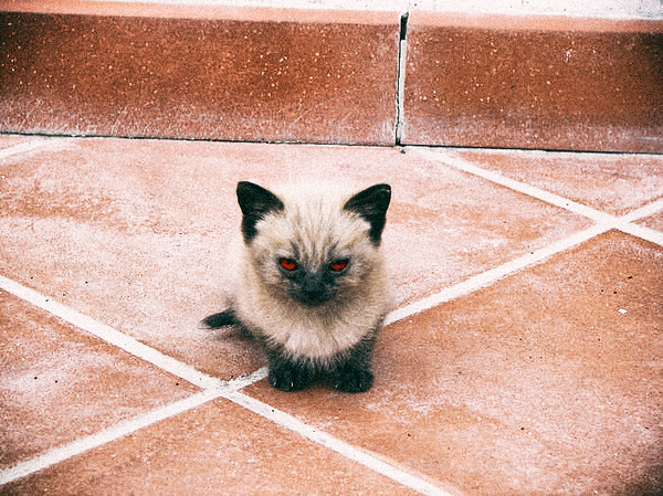 angry wet kitten - 700×525