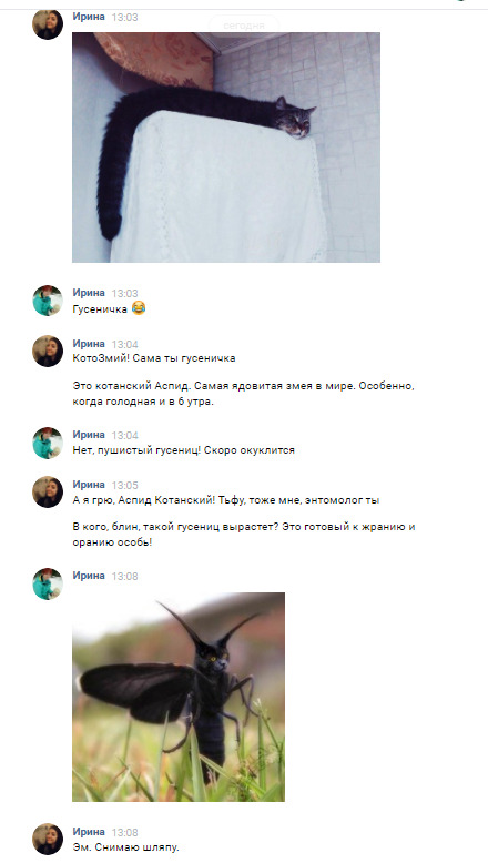 Опровержение! Не котозмей, а гусеничка. Кот, Насекомые, М:, ВКонтакте, Переписка