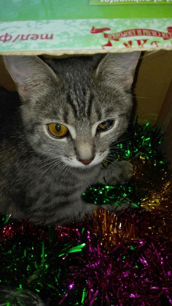 Главное украшение новогодней елки Кот, Мишура, Длиннопост