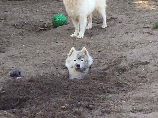 Конец мая. Расцветают первые собаки.