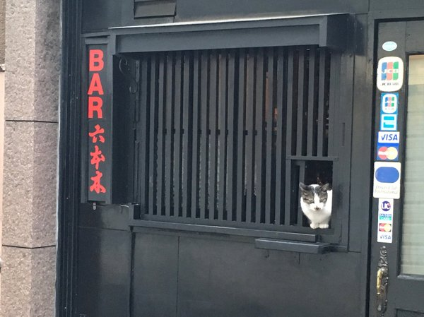 Отличный бар, симпатичный бармен Кот, Бар, Япония, Фотография