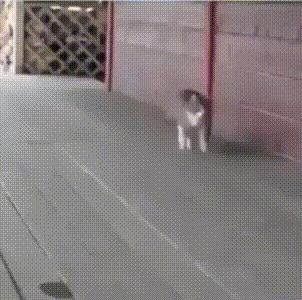 Когда кот растет в конюшне.