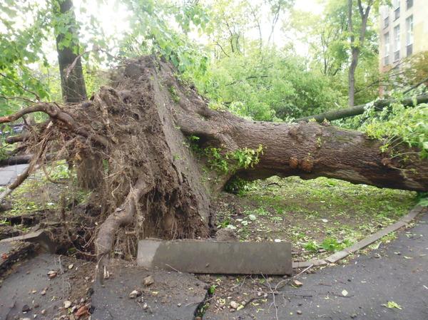 Летний ветерок подул. Ураган, Ураганный ветер, Ветер, Дерево, Валит, Раскурочило, Длиннопост
