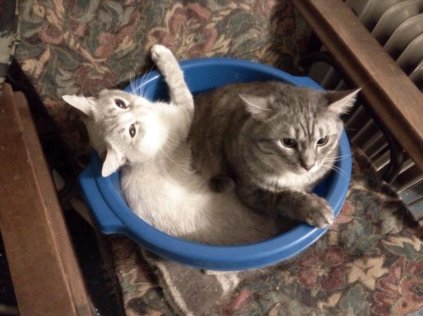 Инь и Янь Кот, Фото кот