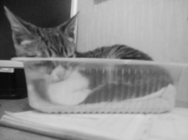 Как мне жить после такого... кот, смерть, Траур