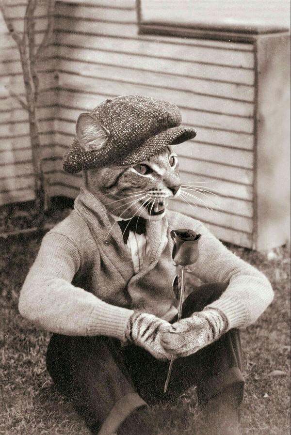 Ретро-коты коты как люди, не фотошоп, фотография, длиннопост, кот