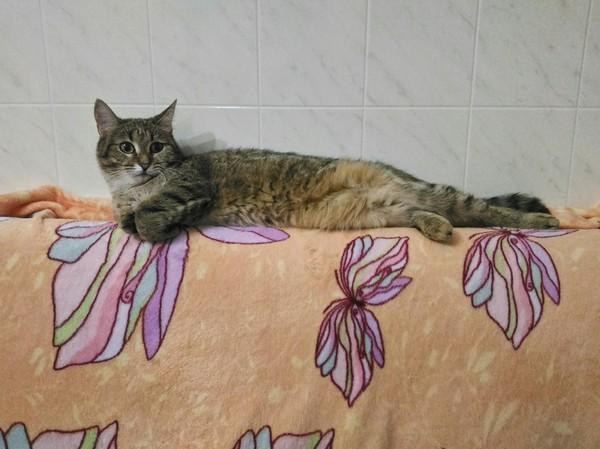 Любит валяться везде и всяко Кот, Трехцветная кошка, Кошка Масяня, Валяется, Фотография, Длиннопост