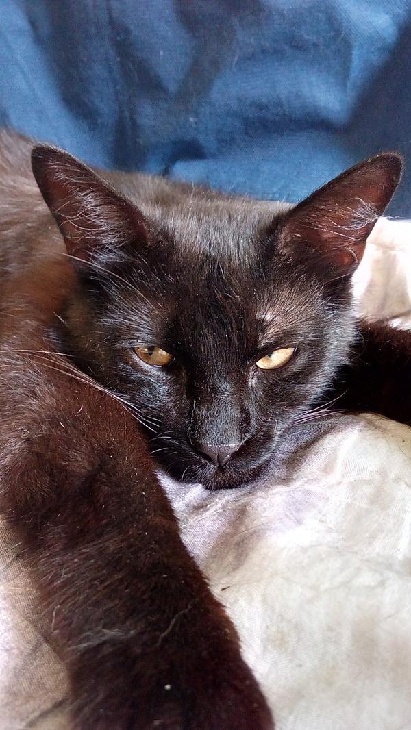 ПРИНЦЕССА КОТОРАЯ ОКАЗАЛАСЬ КОТОМ. кот, найденыш, длиннопост