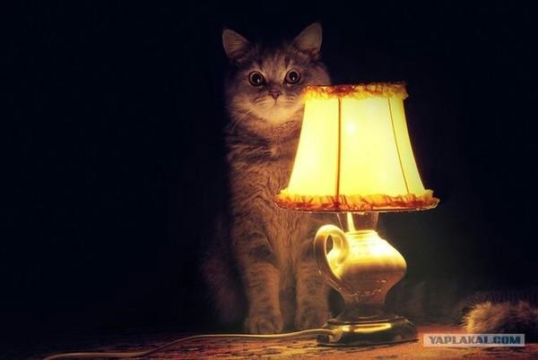 Приснится же такое кот с лампой, воображение, сон, сюжет, выдумка, длиннопост, текст