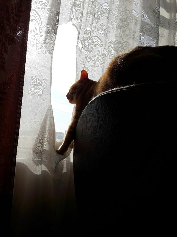 Потому что через шторку котеньке смотреть неудобно!