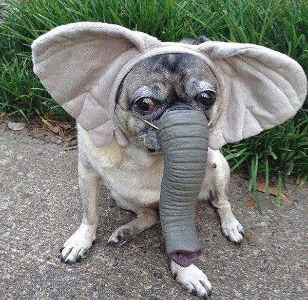 Слонопс.