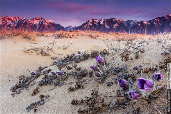 Чарские Пески. Самая неправильная пустыня на свете Познавательно, Интересное, Россия, Пейзаж, Природа, Туризм, Горы, Путешествия, Длиннопост