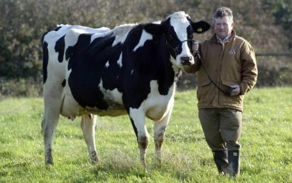 СМИ сообщили о смерти фермера-миллионера после наезда на него собаки на тракторе Англия, Собака, Трактор, Удивительное, Новости