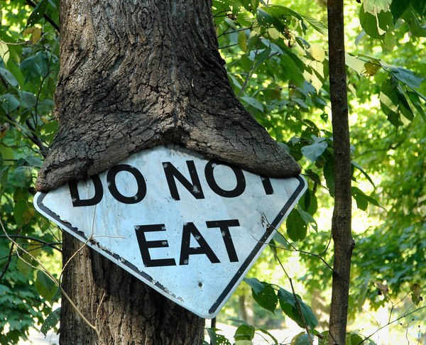 Деревья читать не умеют Дерево, Знак, Природа, Листья, Photoshop