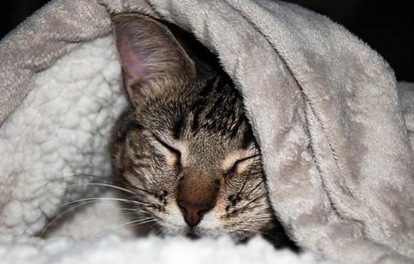 Cat has recurring cystitis
