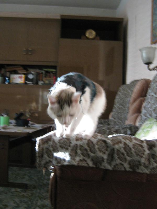 Кот в свитере кот, кот в свитере, кот с лампой, кошки и котята, длиннопост